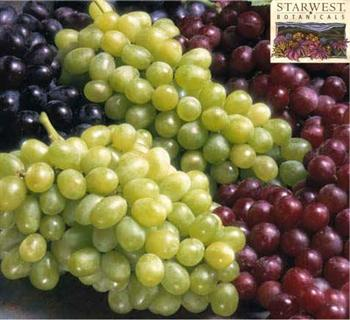مصرف انگور در درمان آرتروز موثر است...